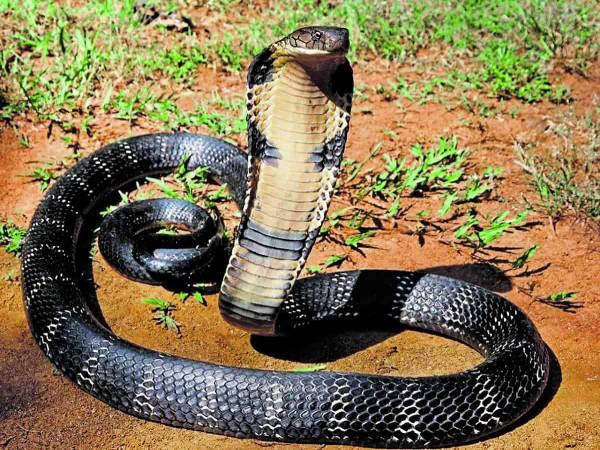 Nằm mơ thấy 2 con rắn đánh con gì dễ trúng có điềm báo gì